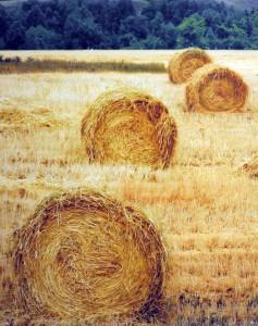 Biomasa – všade vôkol nás