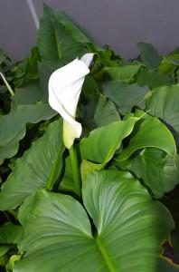 Krásny, elegantný kvet