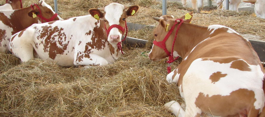Mlieko a potraviny bez aflatoxínov