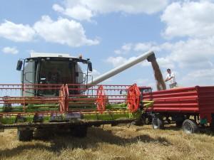 Pšenica naplnila vlečky, nie aj sedliacke vrecká