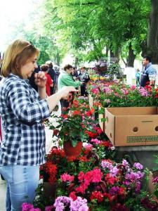 Na Festivale kvetín bola bohatá ponuka a aj záujemcov bolo hodne