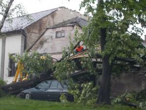 Takto vyzeral zvalený strom pred domom profesorky Zdenky Arianovej zo Starej Pazovy. Hovorí, že mala šťastie, že strom nespadol na dom, ktorý by bol vraj určite riadne oškodený hoci aj zapričinená škoda na aute nie je malá (foto: Obec SP)