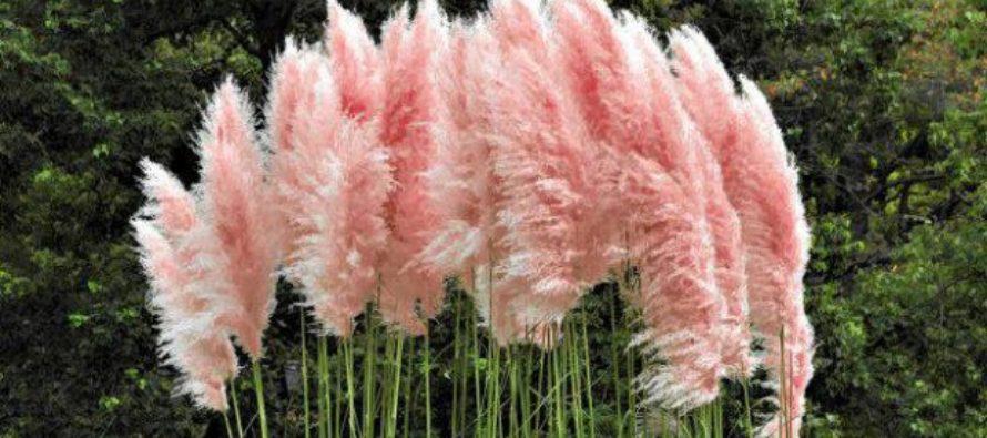 OKRASNÁ ZÁHRADA: Okrasné trávy zdobia záhradu aj v zime