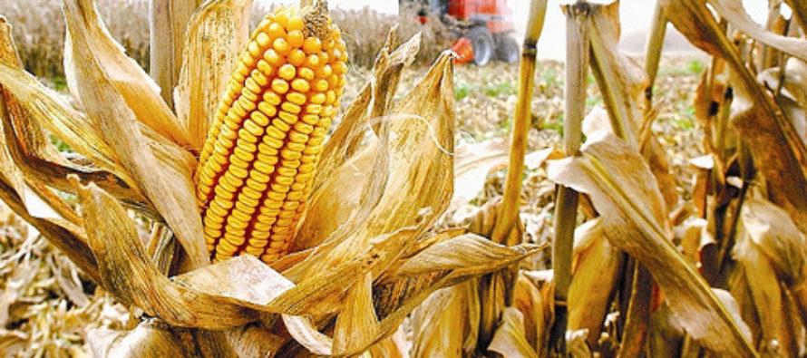 Z PRODUKČNEJ BURZY: Najväčší dopyt bol po kukurici