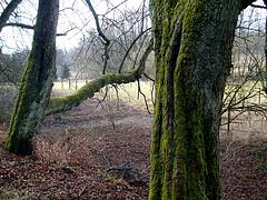 Foto: www.farm9.static.flickr.com