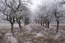 V zimných mesiacoch čistíme kôru stromov