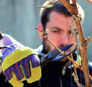 Foto: www.urobsisam.topky.sk
