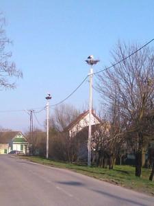 Poplnili sa aj hniezda v Ulici novosadskej v Aradáči