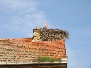 Priletel prvý: Bocian na Hrubíkovom dome v Bielom Blate