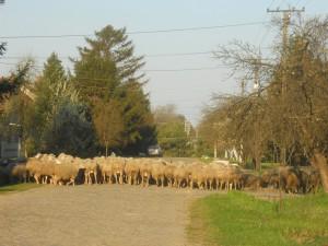 Na ceste za trávou