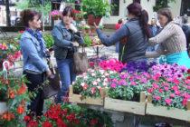 Kultúra, svadobné tradície, kvety…