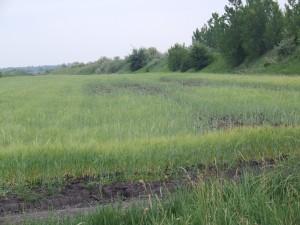 Voda na poli úplne devastovala porasty jačmeňa a pšenice