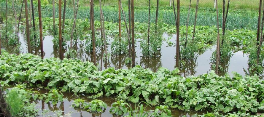Po daždi kriticky v Kysáči