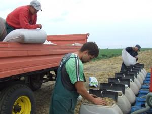 Osivové semeno Merkur pestujú pre novosadský Inštitút NS seme