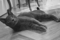 Mačka je ako bomba proti stresu!