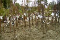 Pripravujeme jamy pre stromčeky