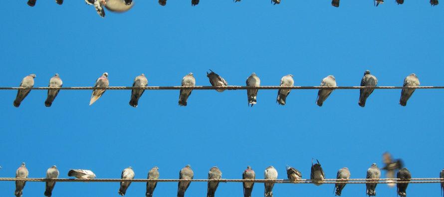 Ohnivá zem pod nohami slovensko-česko-srbských vtákov  (Alebo ako nestratiť krásnu obyčajnosť človečiny)