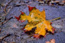 Jeseň ako druhá jar vo fotografii