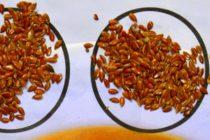 Prírodné potraviny – chutné potraviny