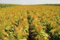 Poľnohospodárstvo je môj život