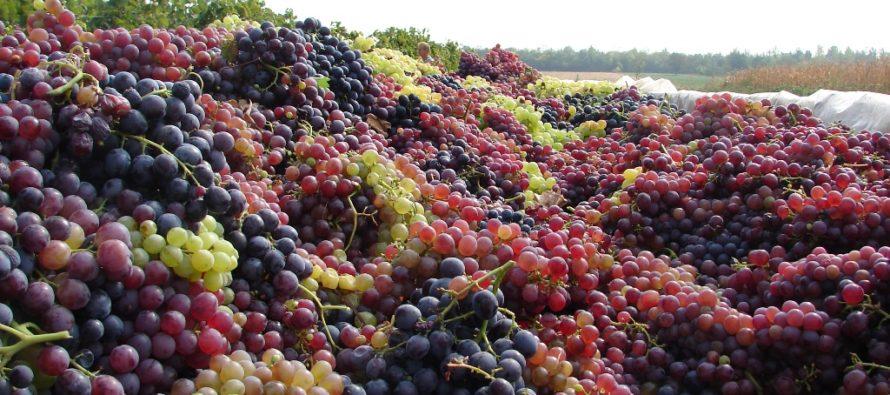 Dobrý rok pre vinárov