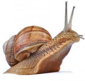 Foto: www.snail-world.com