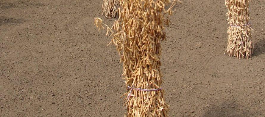 Obchodovalo sa iba so pšenicou a sójou