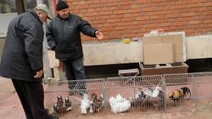 Na nádvorí gymnázia bola burza aj takýchto krásnych domácich miláčikov (na snímke Kovačičan Ján Suchánek so svojimi živými exponátmi)