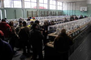 Dni víkendu v Kovačici spríjemnila výstava drobných zvierat, holubov a okrasnej hydiny