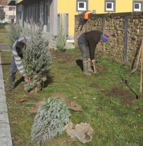 Robotníci Čistoće vďaka peknéu slnečnému počasiu usilovne pracovali v novej ulici v Starej Pazove (Foto: A. Lešťanová)
