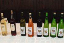 Vyhlásili najlepšie aradáčske vína