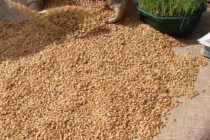 Z PRODUKČNEJ BURZY: Cena pšenice nižšia ako čo bola počas žatvy