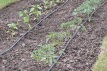 Zavlažovanie vo fόliovníkoch a skleníkoch