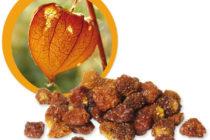 Machovky – plody plné vitamínov