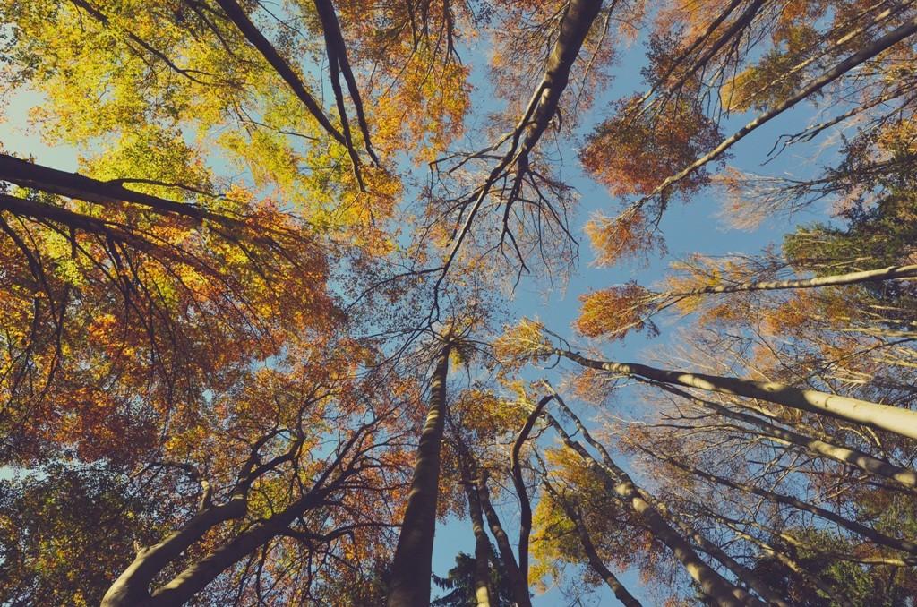 Foto: www.unsplash.com