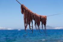 Chobotnica z Panamy a obmeny tunajších