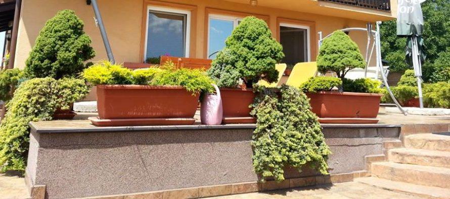 Dreviny v nádobách počas zimných mesiacov