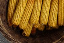 Z PRODUKČNEJ BURZY: Vyššia cena kukurice a sóje