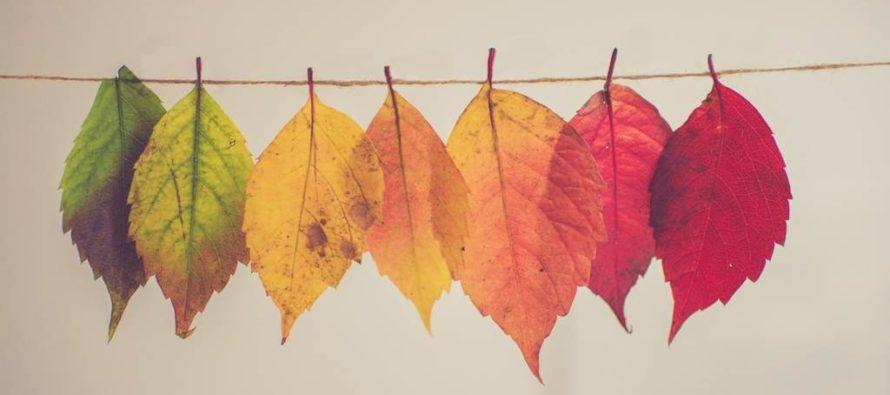 Rozličnosť jesenného upratovania