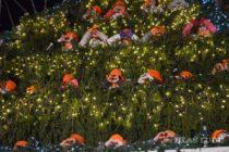 Otvorili Novosadský Winter Fest