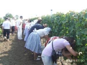 Vo svojom vinohrade, ktorý je vyhlásený za najupravenejší rodina  Pavla Janča vlani uhostila aj účastníkov oberačky
