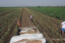 V Kysáči zorganizovali prednášku o pestovaní ovocia