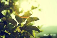 Apríl a slnko v Srbsku