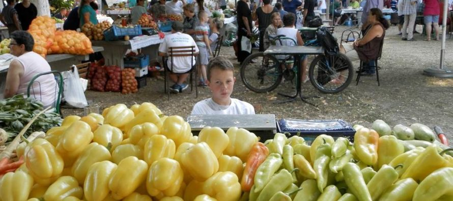 Víťazom 11. Dňa zeleniny je fazuľa