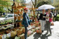 Kovačická výstava medu a kvetov prilákala návštevníkov