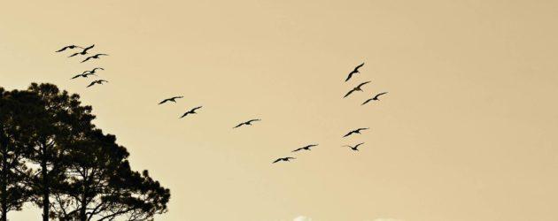 birds-1835510_1920