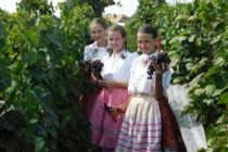 Hold vinohradu a vínu