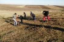 Akcia zalesňovania v Padine