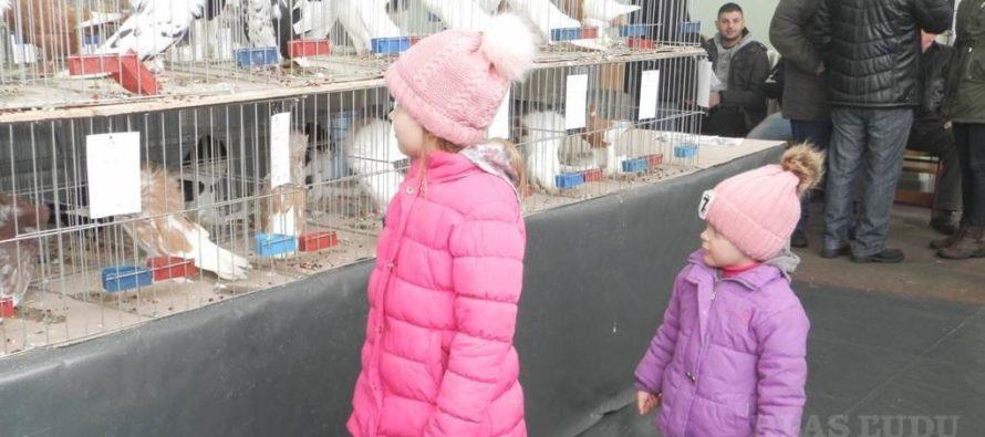 Kovačická výstava drobných zvierat má za sebou 52. ročník