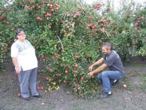 V ovocnom sade Vieročky a Miroslava Marčekovcov sa haluze lámali pod váhou plodov